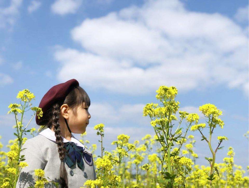 菜の花と園服を着た女子児童